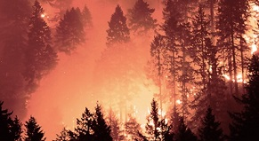 Dixie Fire Lawsuit | Attorney (530) 325-8828